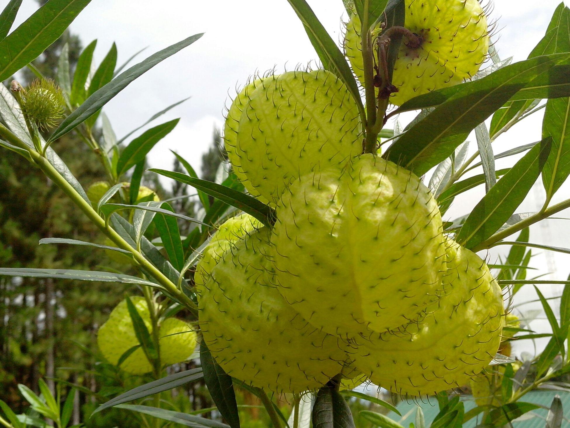 Eyeem Philippines Bukidnon EyeEm Nature Lover Flowers,Plants & Garden