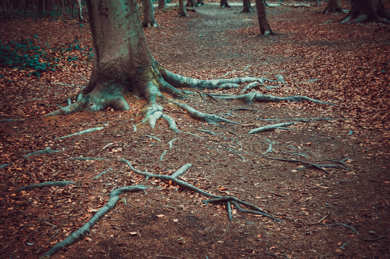 Colorful Colourful Creepy Roots Day Lots Of Leaves Nature No People Outdoors Tree Roots