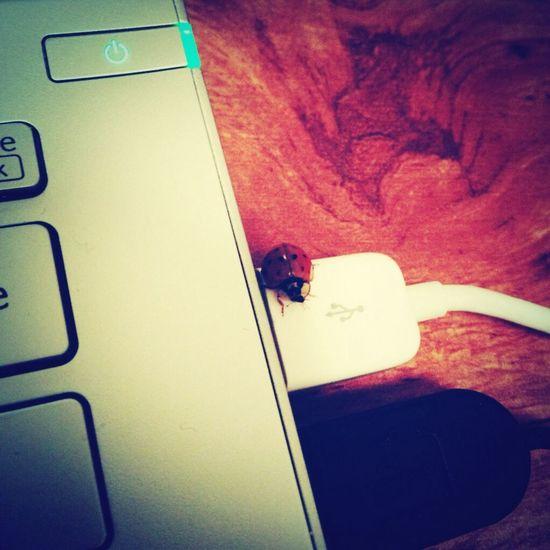 Surprise Ladybug LaptopCute