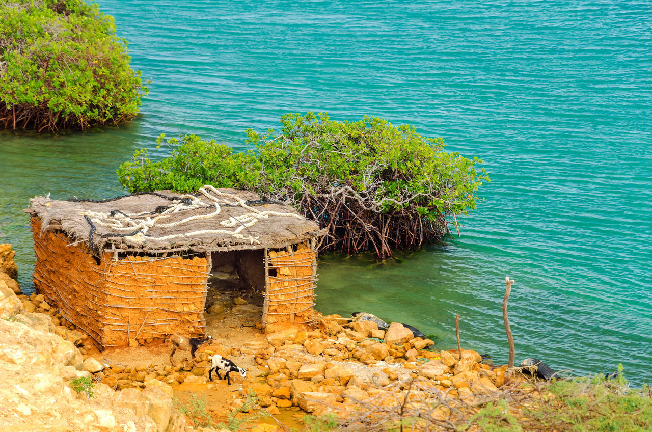 Two goats in front of a small mud shack near Punta Gallinas in La Guajira, Colombia Beach Beautiful Cactus Calm Caribbean Coast Coastline Colombia Day Goat Hot Idyllic La Guajira La Guajira Colombia Landscape Nature Nobody Ocean Outdoor Paradise Punta Gallinas Riohacha Sand Sea Travel