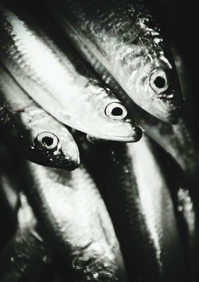 Fish Fishes FishEyeEm Photography Photo Food Close-up Foodphoto Foodphotography Foodstyling Foodphotograpy Seafood Animal Body Part Animal Eye Animal One Animal Animal Head  Animal Wildlife No People Animal Themes Sea Life Healthy Eating Nature UnderSea Freshness Outdoors First Eyeem Photo