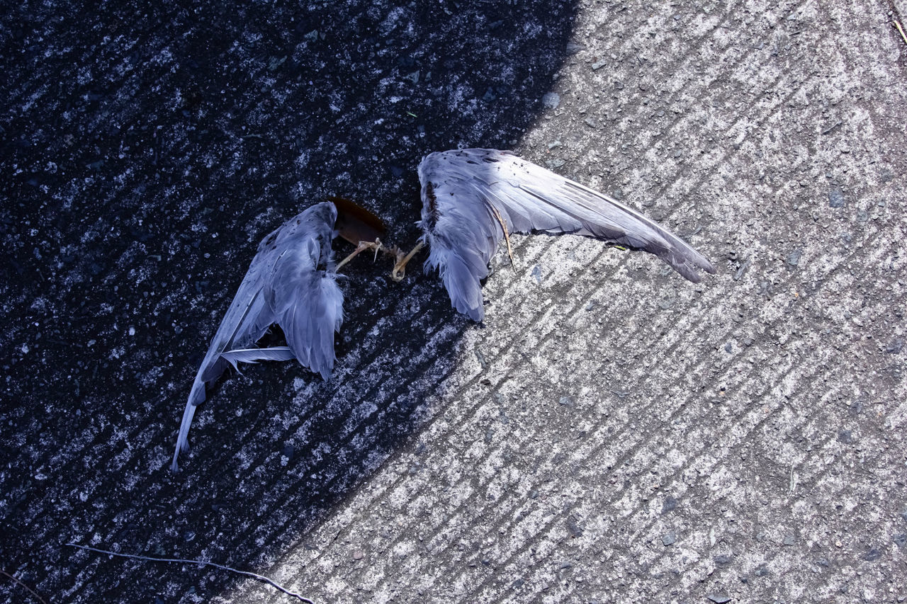 Angel Wings Animal Themes Animal Wildlife Bird Broken Day Decay Defeat Existentialism Feathers Of A Bird Flying Gothic Style No People Outdoors Spread Wings First Eyeem Photo