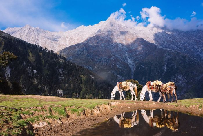EyeEm Selects Mountain Mountain Range Nature Sky Day Beauty In Nature Animal Themes Outdoors Cloud - Sky No People Mammal Landscape Sunlight Domestic Animals Scenics Livestock Rocky Mountains Snow Dunky Horse Reflection India Himalayas Triund