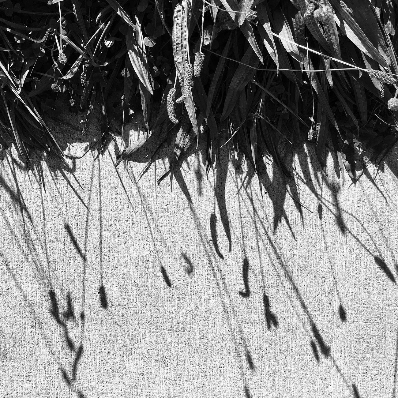 Black And White Blackandwhite Photography Monochrome Blackandwhite Dutch Landscape Nature Photography Nature_collection Dutch Countyside