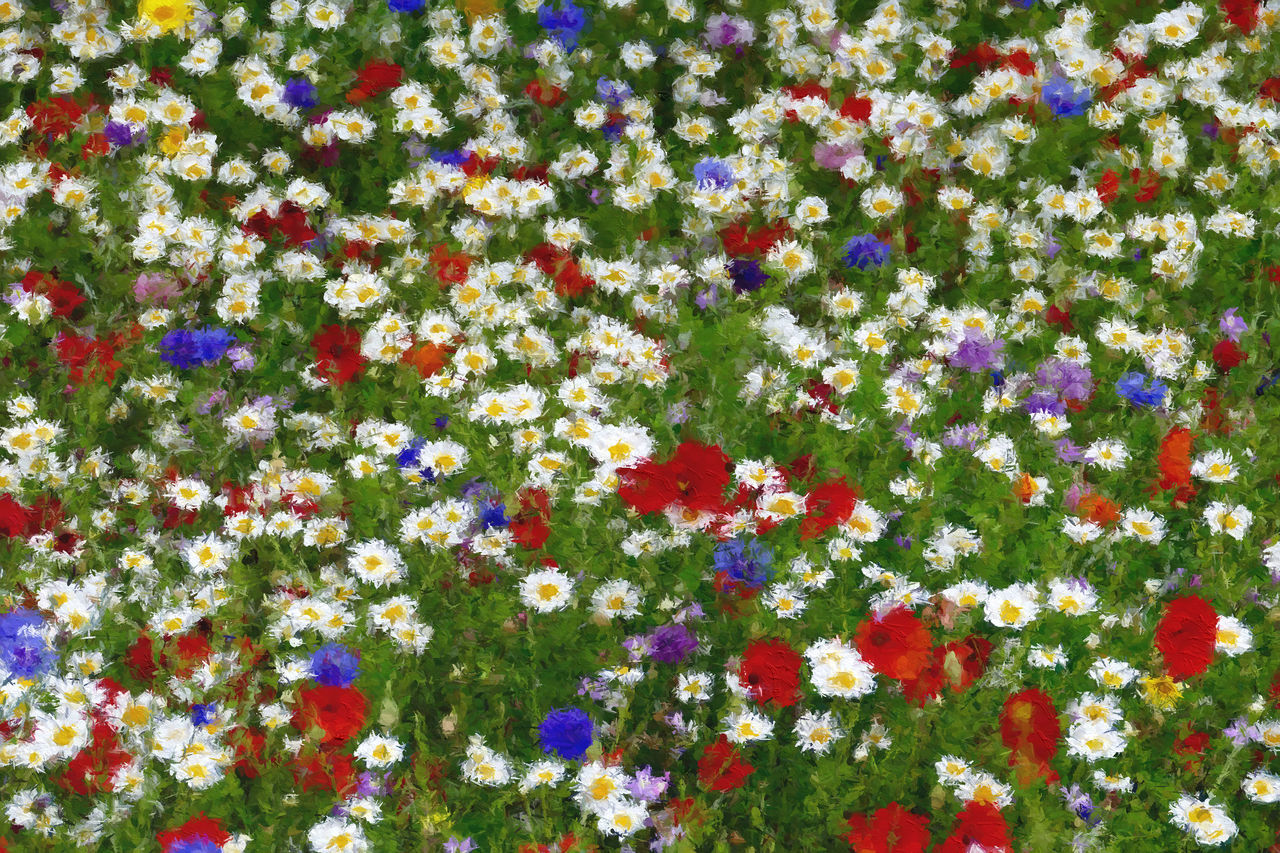 Wild Spring Flowers Backgrounds Beauty In Nature Blooming Close-up Colour Splash Daisies Day Flower Flower Head Fragility Freshness Full Frame Growth Multi Colored Nature No People Outdoors Plant Poppies, Poppies Will Put Them To Sleep...sleep, Now They'll Sleep Wild Flowers