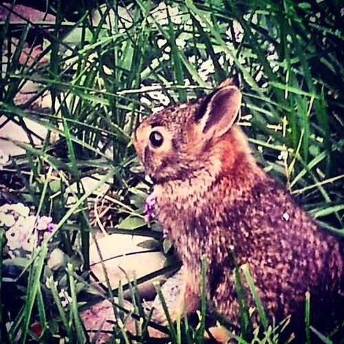 Chicagogram , Chicagoigrs , Tracyj2472 , Tracys_treasures_photography , bunny, rabbit, spring, newborn