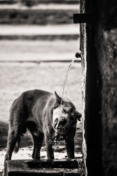 Dogs India Love Animal Themes Animals Blackandwhite Bnw_collection Bnw_life Bnwphotography Day Nature Outdoors Pets Photography Photooftheday