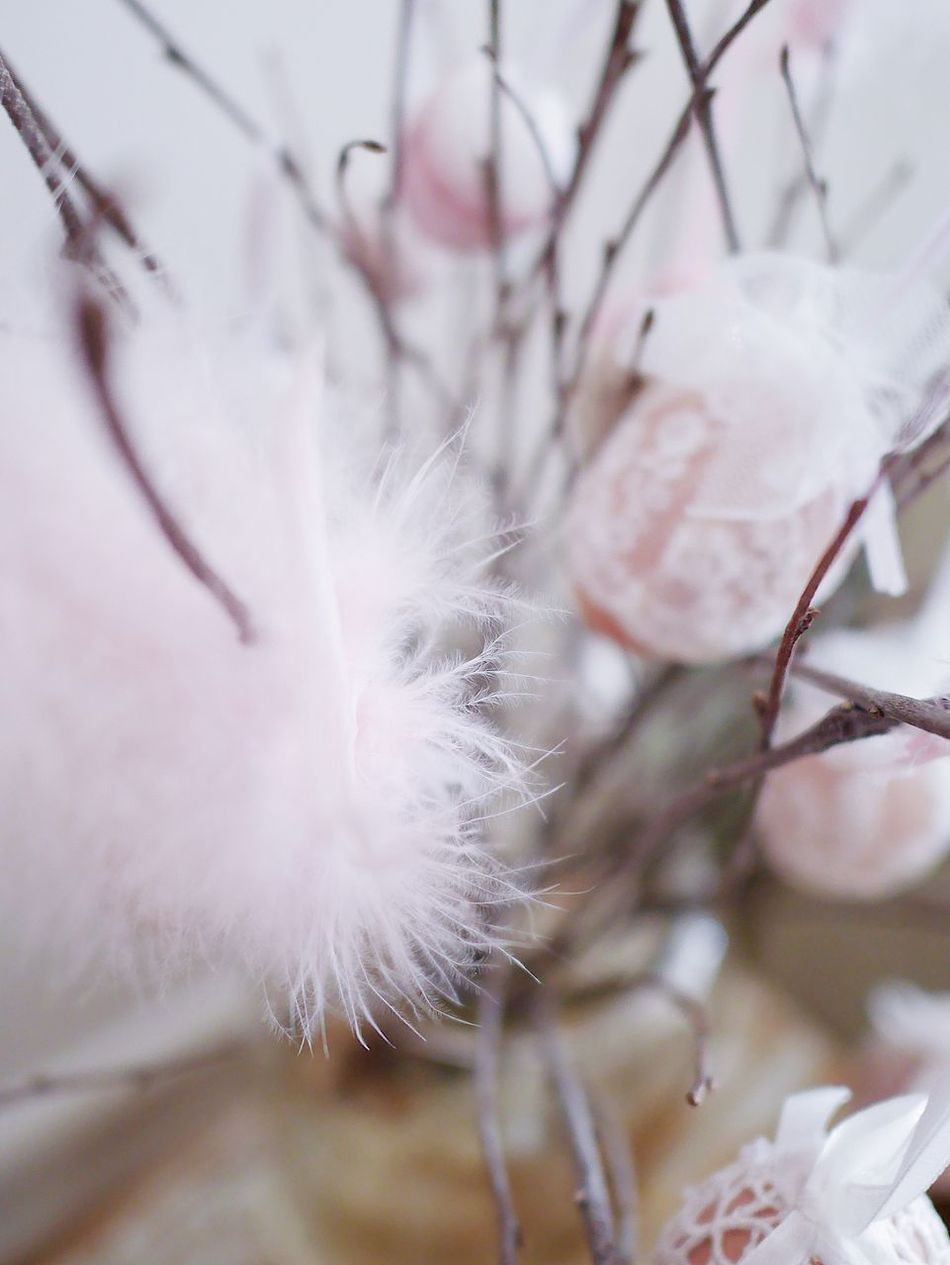 Close-up Fragility Beauty In Nature Nature Flower Focus On Foreground Growth Plant No People Day Outdoors Flower Head Freshness Softness Still Feathers Branch Egg Still Life Pastel Colors Decoration Ornamental Indoors  Home Interior Backgrounds