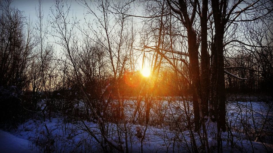 First sunset 2017 Sunset Tree Sun Nature Sky Scenics No People beauty in nature Scenery Scenic Landscapes Winter Winterscene Sunlight Outdoor Photography Outside 2017 Sun