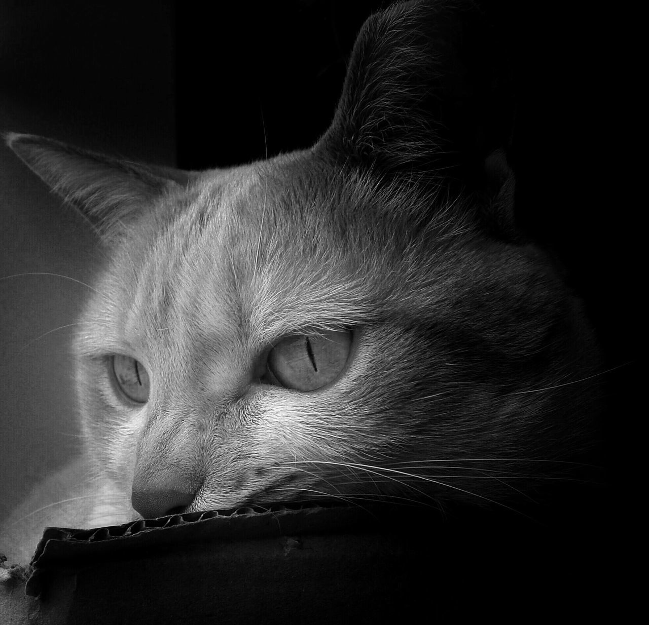 one animal, domestic animals, animal themes, domestic cat, mammal, pets, feline, indoors, no people, relaxation, close-up, night