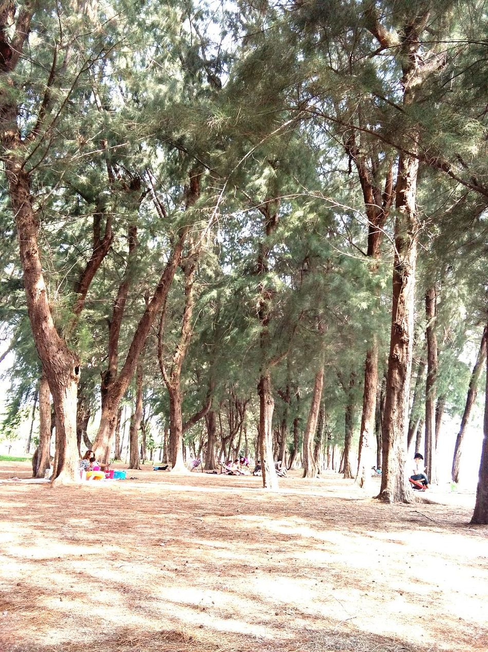 Tree Sea Sea And Sky Outdoors Nature On The Beach ☀️ Travel Holiday Trip Trip Tangao