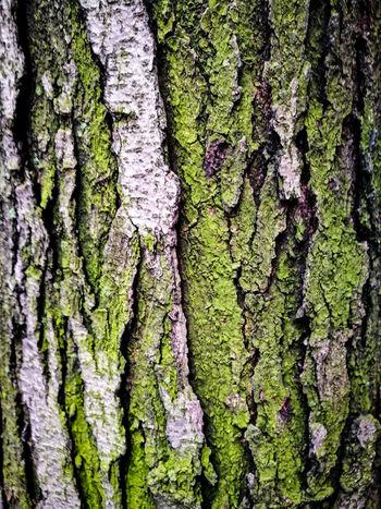 Texture Set RahimNoel Rahim New York NYC NY Beautiful Vivid No People Beauty In Nature First Eyeem Photo Tree Trunk
