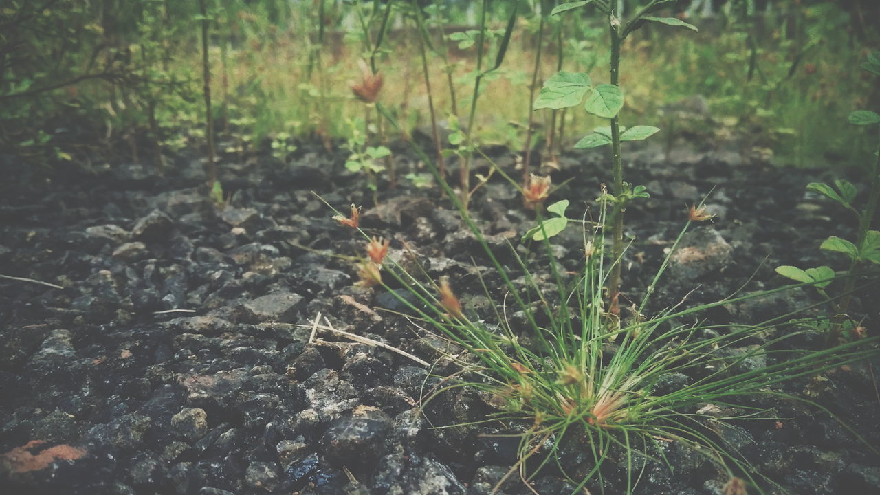 nature, growth, plant, leaf, no people, outdoors, beauty in nature, day, fragility, freshness, close-up