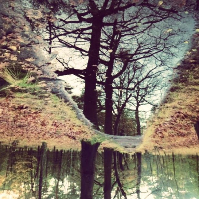Forest Tree Reflection Sky Water Branches Colour Netherlands Perspective Insta_netherlands Instamood Desserted Winter Autumn Colours Walkingtrail