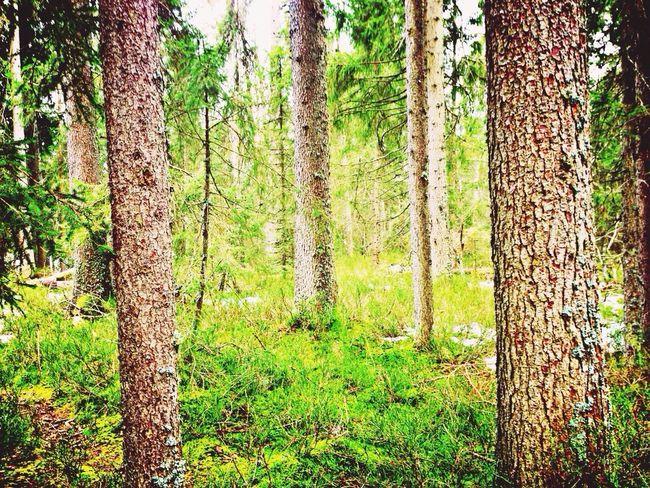Beautiful Green Nature Hugging A Tree