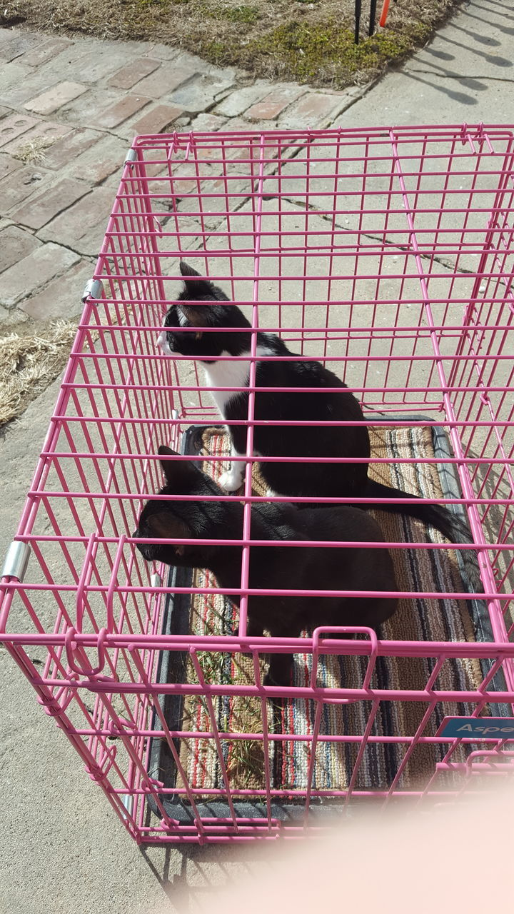high angle view, day, outdoors, cage, one animal, animal themes, no people, mammal, domestic animals, pets, nature