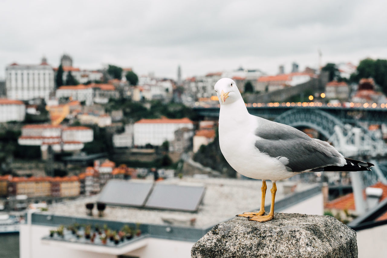Animal Themes Animals In The Wild Architecture Bird Building Exterior Built Structure City Cityscape Day Focus On Foreground No People One Animal Outdoors Roof Sea Bird Seagull Sky Travel Destinations Traveling White Color