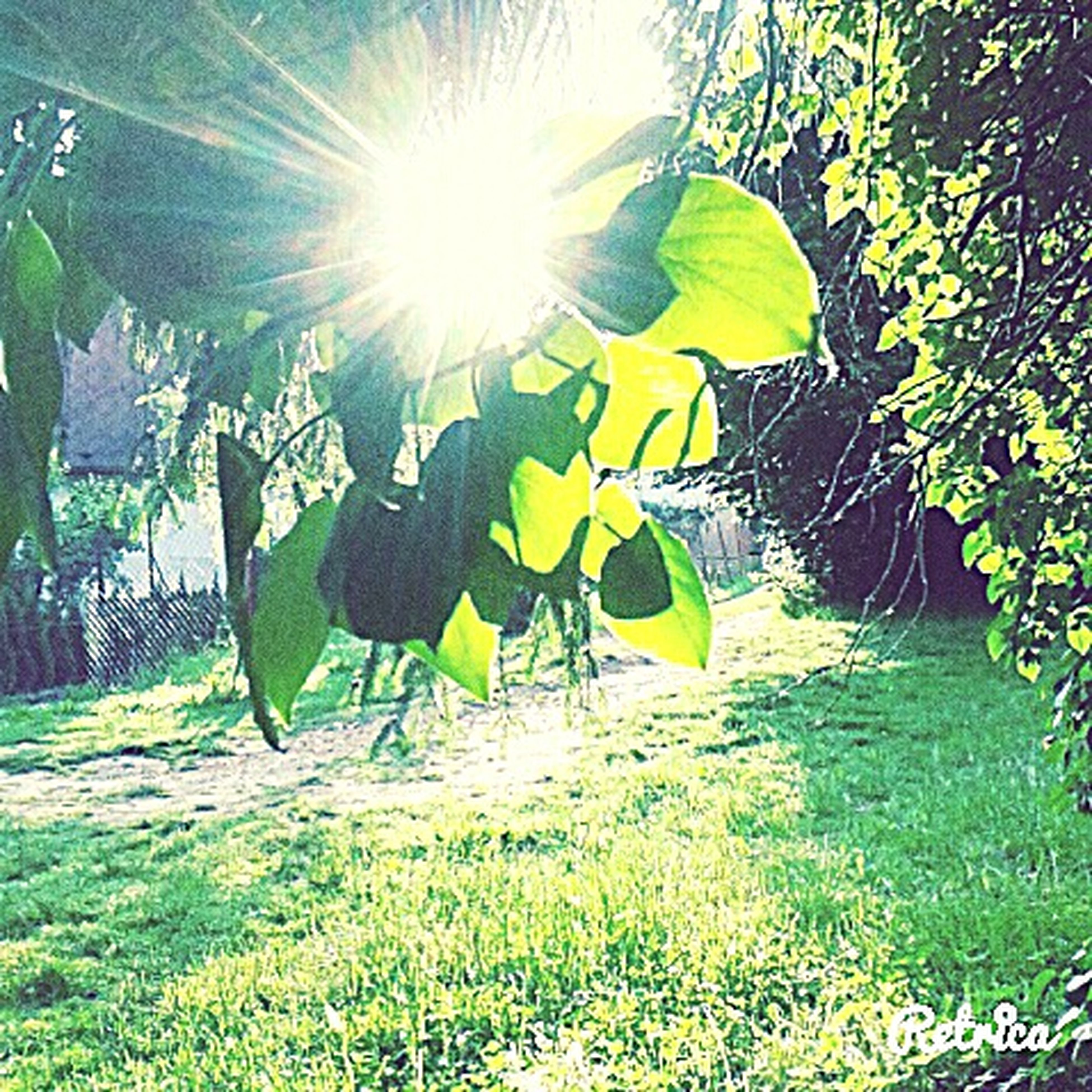 sunlight, sun, sunbeam, lens flare, green color, grass, field, sunny, nature, tree, growth, low angle view, day, tranquility, sky, plant, outdoors, beauty in nature, landscape, leaf