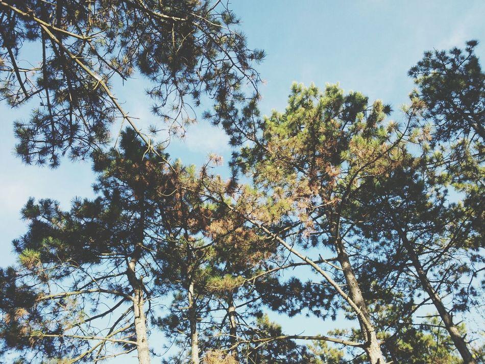 Wood Trees Silence Alone First Eyeem Photo