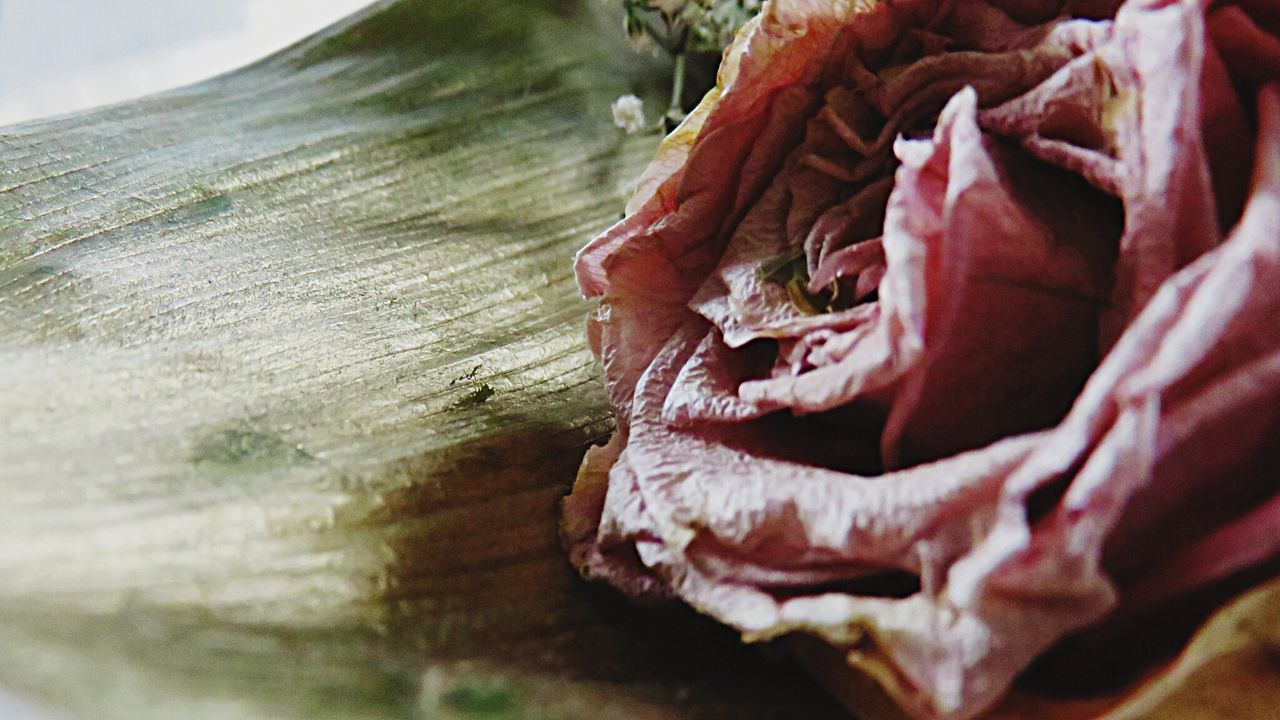 Rose🌹 Roses Rosé Pink Rose Golden Leaf Rosé Rose♥ Flowers Beautiful