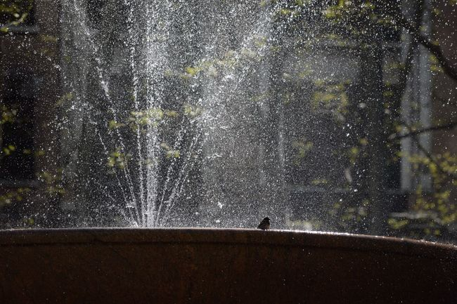 Showering Taking A Bath Bird Bath Bird Photography Nikon Photography NYC Captured Moment Enjoying The View Enjoying The Moment Places I've Been Nikond3300 Nikon D3300 Enjoying Time NYC Photography Enjoying The Sights Enjoying Life Capture The Moment City Life NYC Street Photography My View Birds_collection Birdwatching Long Exposure Fountain Rsa_streetview