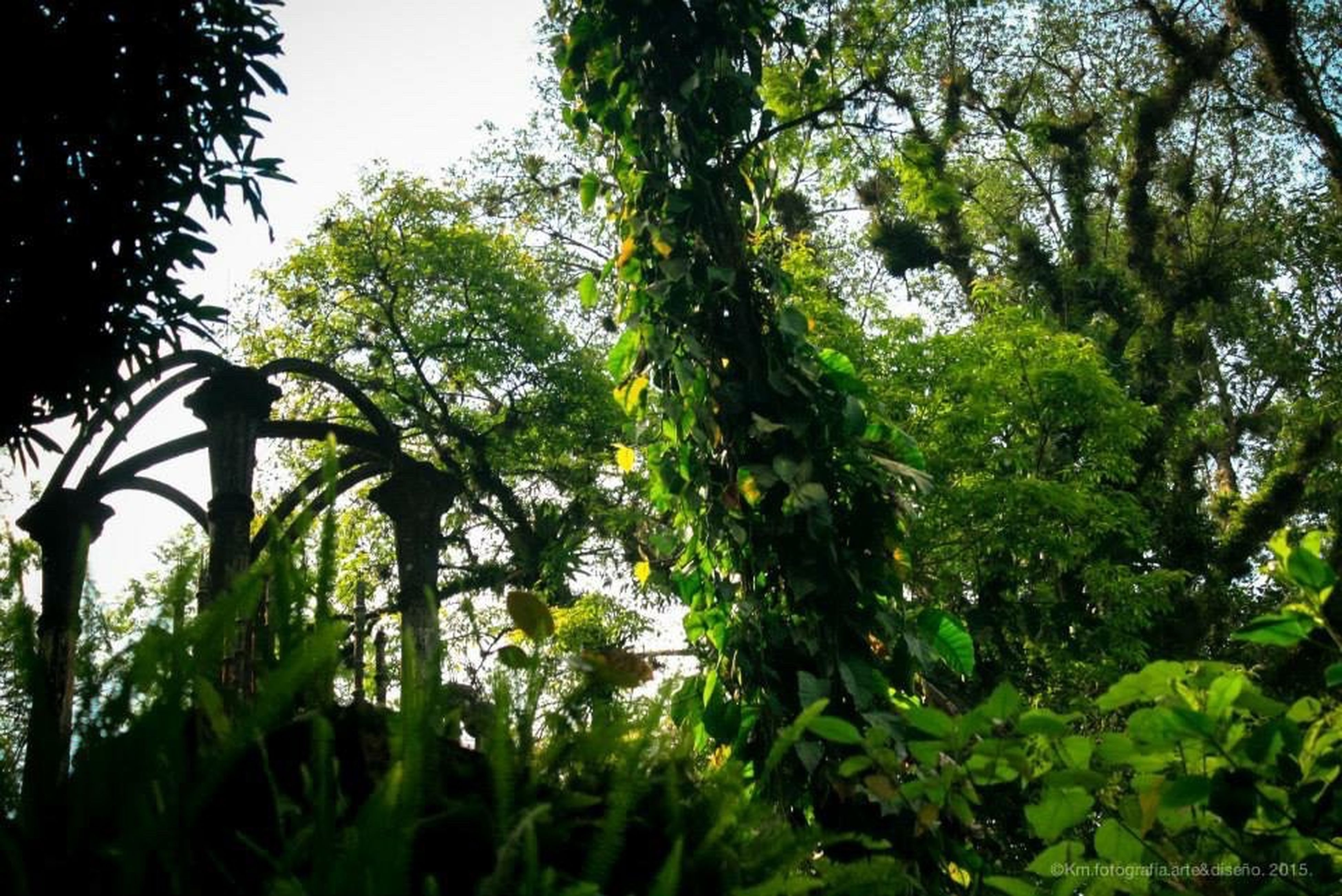 tree, growth, green color, nature, plant, low angle view, clear sky, branch, tranquility, leaf, beauty in nature, lush foliage, outdoors, day, no people, green, growing, sunlight, forest, fence