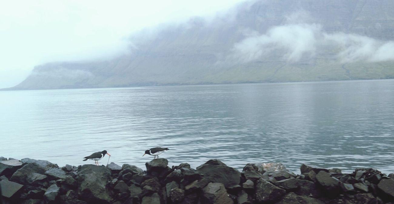 Hallo Look! See what I found big Worm Birds Bird Birdfeeding Nature Sea And Sky Mountain Foggy Weather