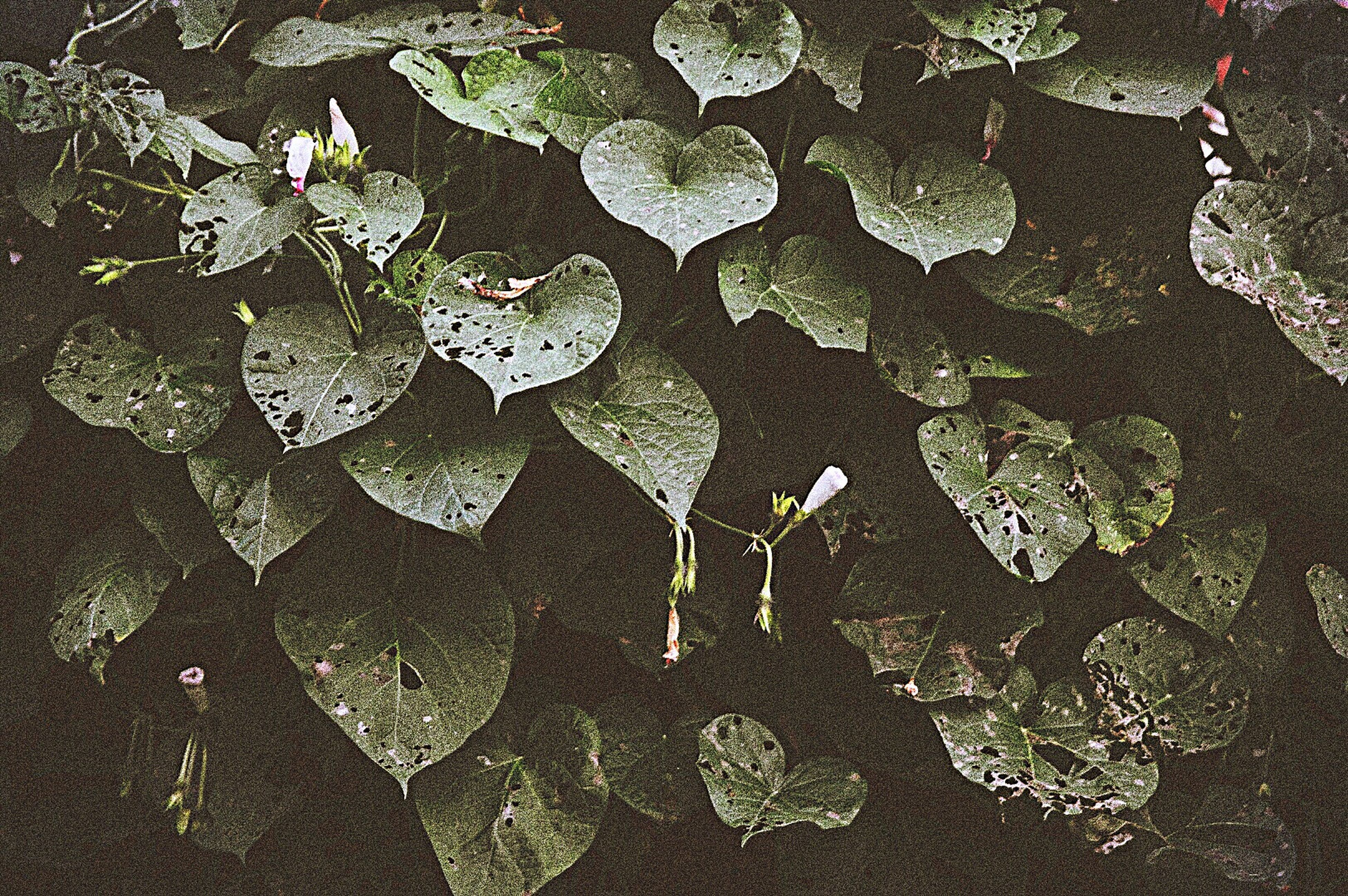 no people, high angle view, nature, leaf, day, fragility, outdoors, close-up, beauty in nature, water