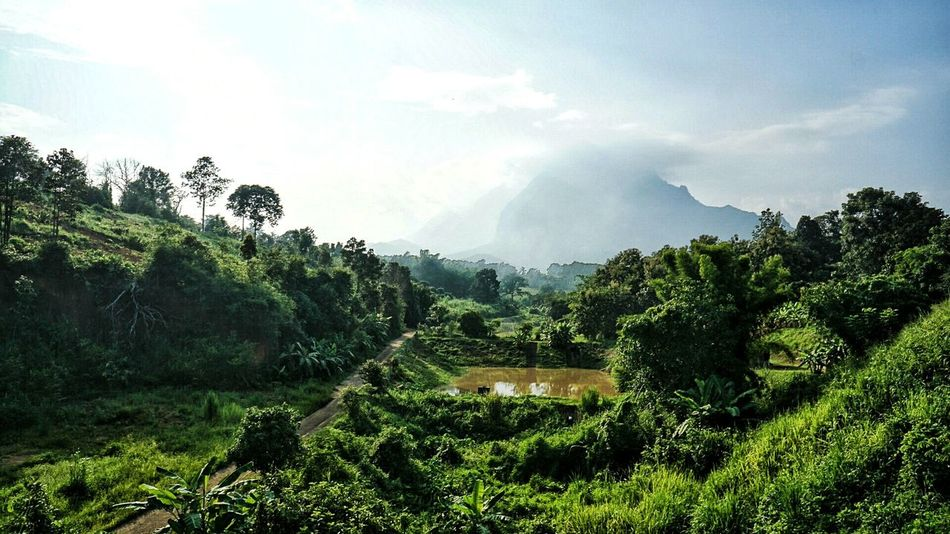 Tree Tranquil Scene Landscape Scenics Tranquility Growth Agriculture Farm Mountain Beauty In Nature Rural Scene Sky Travel Destinations Field Green Color Nature Cloud - Sky Plant Non-urban Scene Crop  Chiang Dao Doi Luang