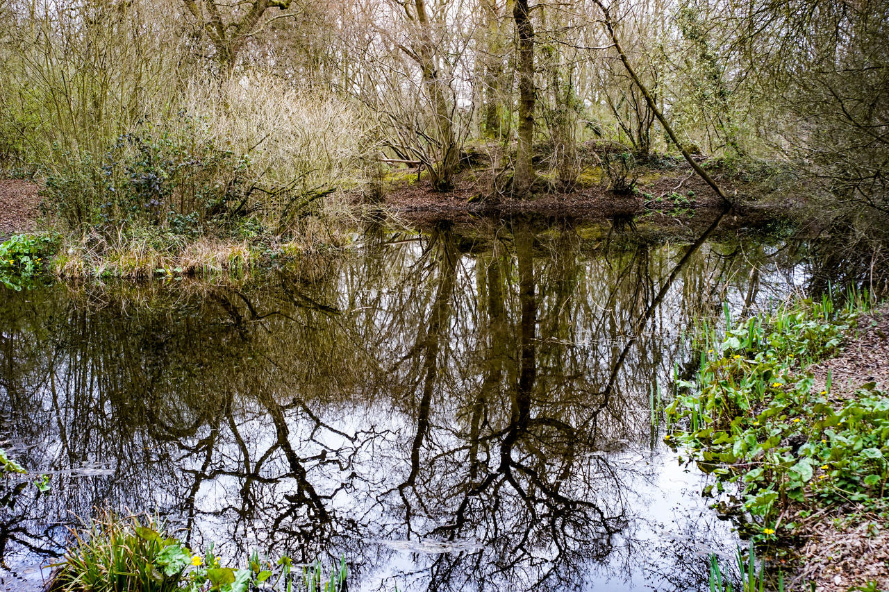 EyeEm Selects Copford East Anglia Essex Colchester Nature Green No People Outdoors Trees Reflections In The Water Water Pond in Copford, Essex