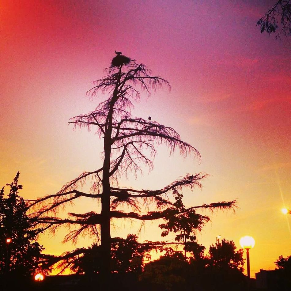 Sunset Silhouette Dramatic Sky Tree Sky Beauty In Nature Outdoors Nature Landscape No People Colorful Cigüeñas City Cityscape Color Photography Beauty In Nature Landscapes