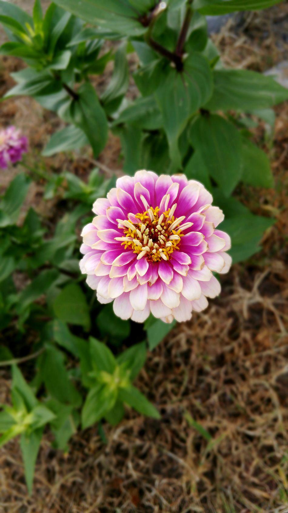 Nature On Your Doorstep Good Morning Everyone✌❤🌺