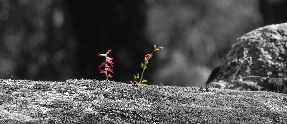 Encontrado una pequeña flor Libre Como El Viento Mountains Nature Flowers