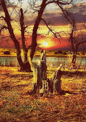 الطبيعة First Eyeem Photo