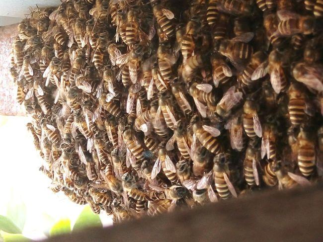 Bee Bee 🐝 EyeEm Malaysia Taking Photos Eye4photography  Phoneography HoneyBee