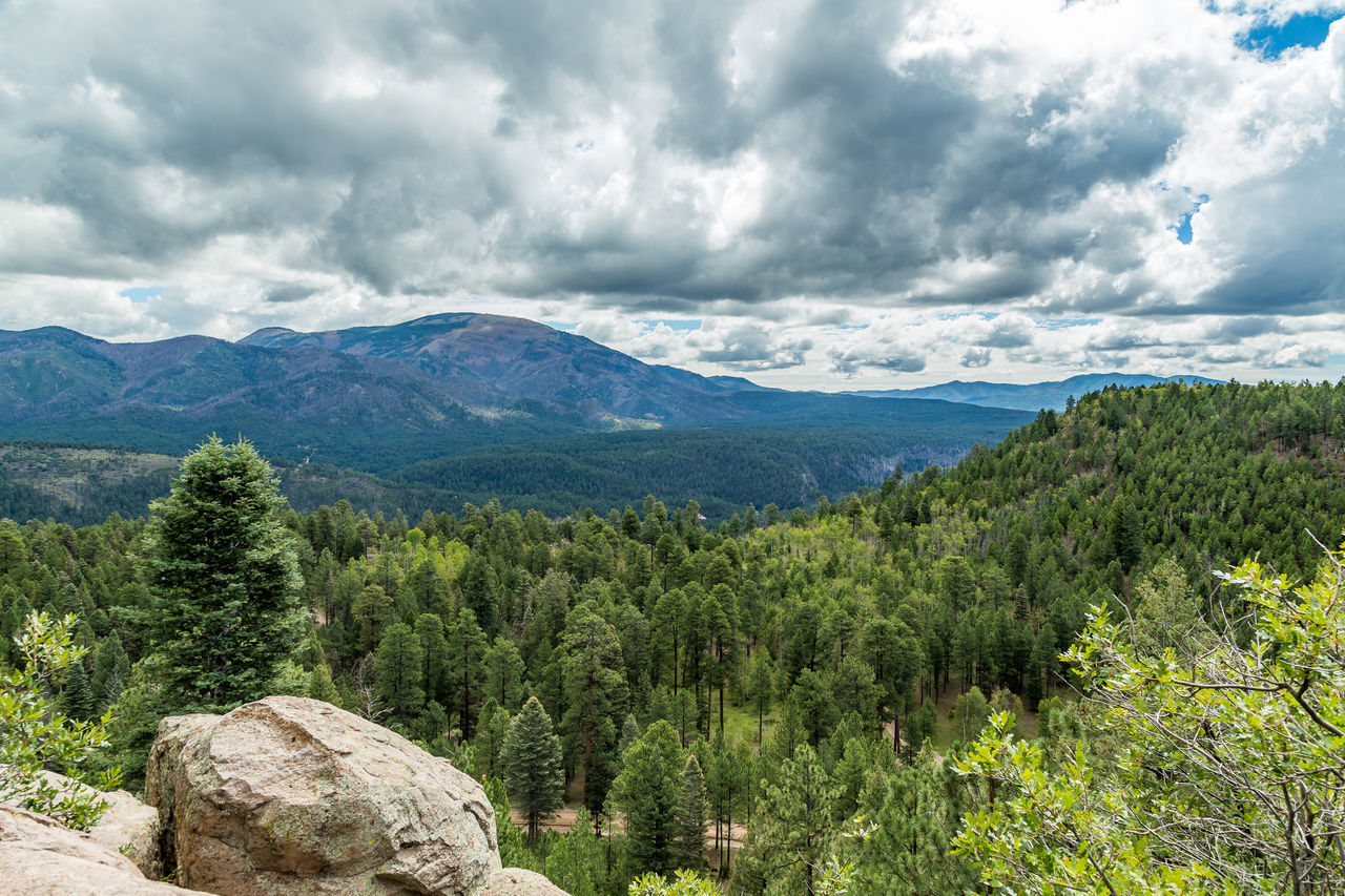 Cebollita Mesa is an 8,736 foot mountain peak in northern New Mexico neat the Valles Caldera. Beauty In Nature Cloud - Sky Day Forest Geology Landscape Mesa Mountain Nature New Mexico No People Outdoors Scenics Southwest  Southwestern Usa Travel Destinations Tree