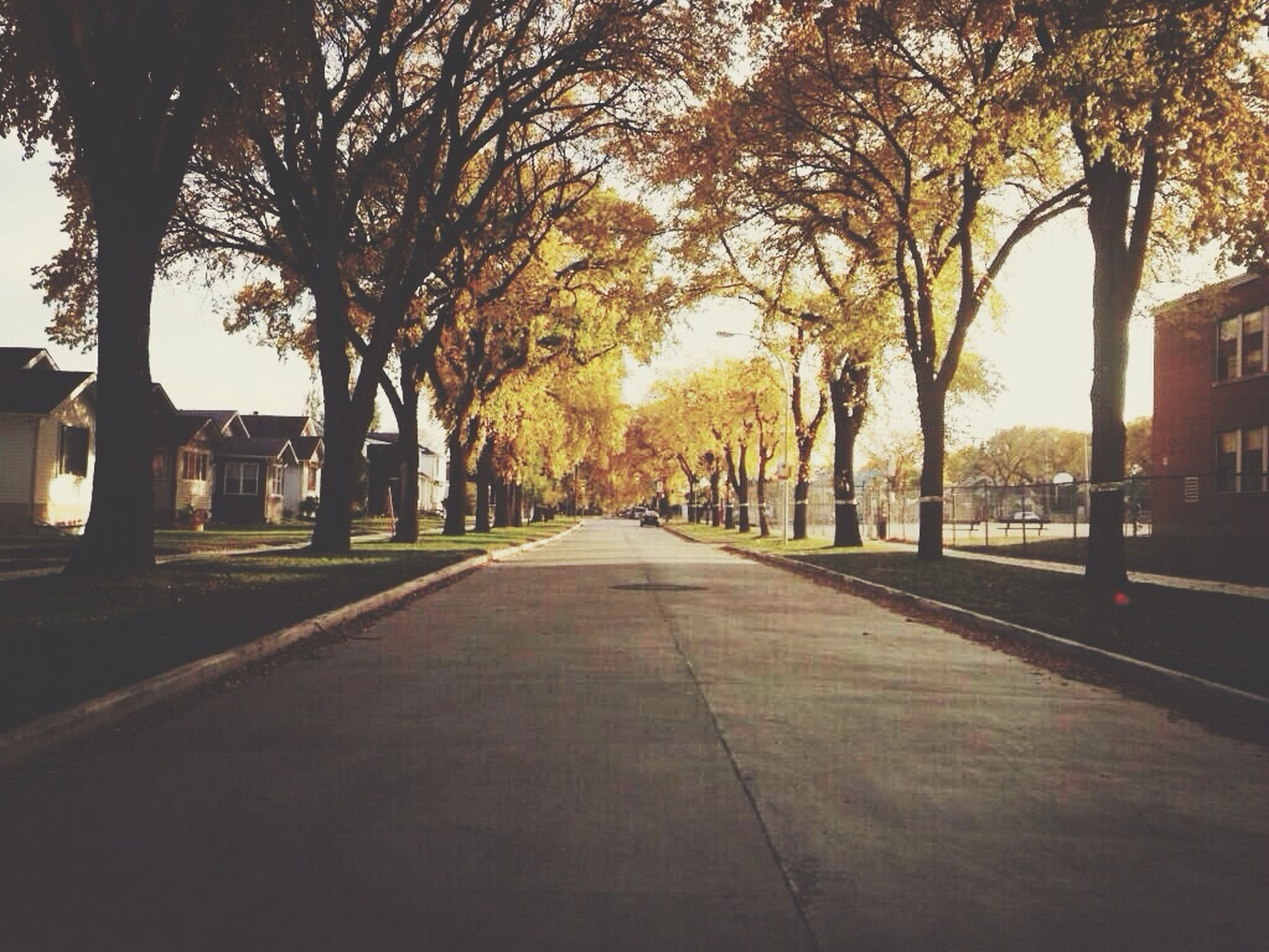 tree, the way forward, diminishing perspective, building exterior, architecture, built structure, vanishing point, sunset, treelined, transportation, street, sky, city, footpath, sunlight, autumn, road, outdoors, nature, orange color