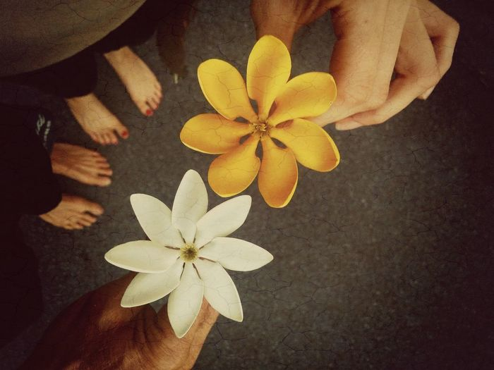 Paint The Town Yellow love Together Forever High Angle View Directly Above Flower Head Feet On The Ground Feetselfie Lovers Lovers And Friends Yellow Flowers Jungle Jasmine Scent Flowers