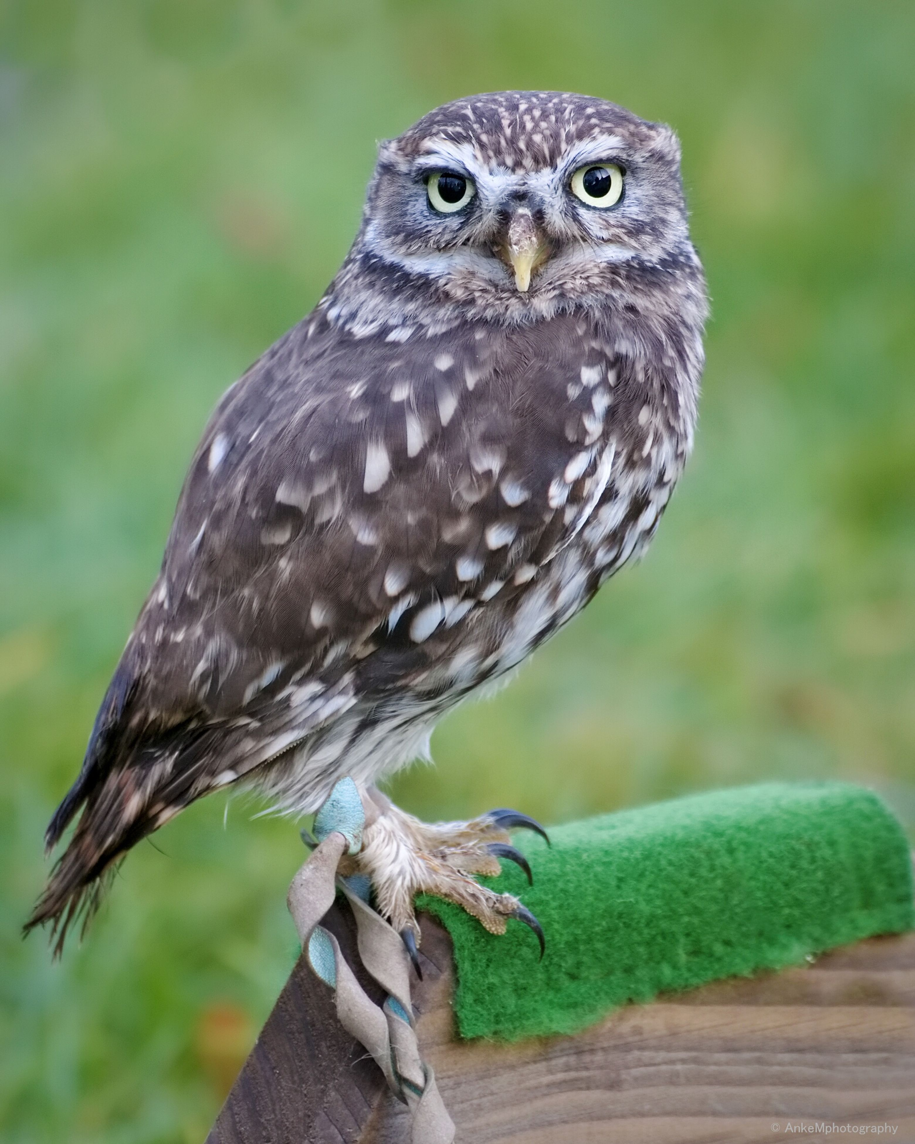 animal themes, one animal, bird, animals in the wild, wildlife, focus on foreground, close-up, perching, full length, beak, bird of prey, owl, looking away, side view, nature, outdoors, day, no people, zoology