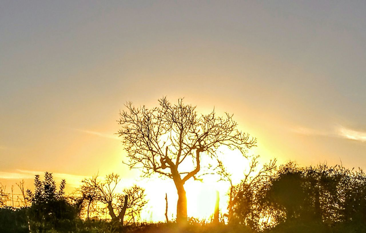 Trees in Sunset... Sunset Nature Silhouette Sun Beauty In Nature Outdoors Tree Sky PalmaDiMaiorca GetbetterwithAlex Silhouette Picturing Individuality Nostalgic Scene Growth Originalpicture Tranquil Scene Nature Idyllic Landscape Trees And Nature