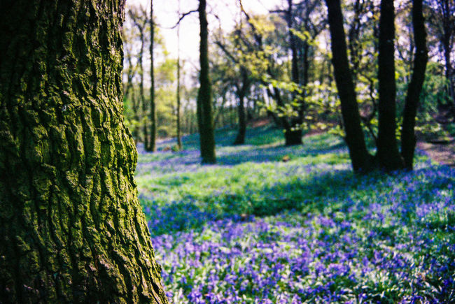 Went for a little explore around kings woods. Taken with a Nikon F60. Doncaster NikonF60 Woodlands Film Camera
