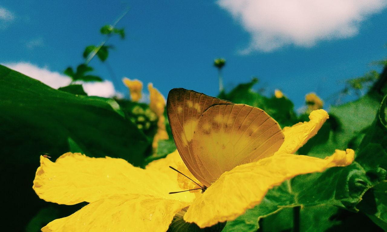 Butterfly.. VSCO Vscocam Vscobutterfly Vscogood Vscosky Vscocamthailand Picturebyaon