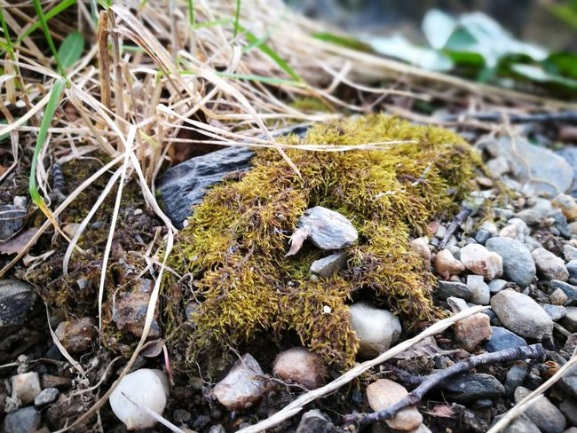 High Angle View Nature Fragility Day Focus On Foreground Fungus Botany New Life Outdoors Growth Argentina Ushuaia Argentina Argentina Photography Ushuaia Arg. Ushuaïa Fin Del Mundo Argentina 👑🎉🎊👌😚😍 Ushuaia Paisaje Ushuaia Tierradelfuego Majestic Beauty In Nature Nature