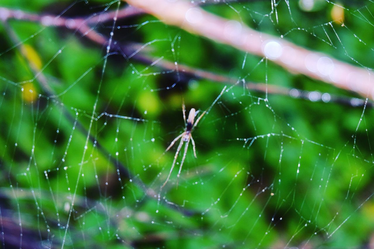 Spider Web Spider One Animal Animal Themes Focus On Foreground Fragility Nature Web Close-up Outdoors Day Animals In The Wild Beauty In Nature No People Animal Wildlife Complexity Insect Animal Leg Intricacy Survival EyeEmNewHere