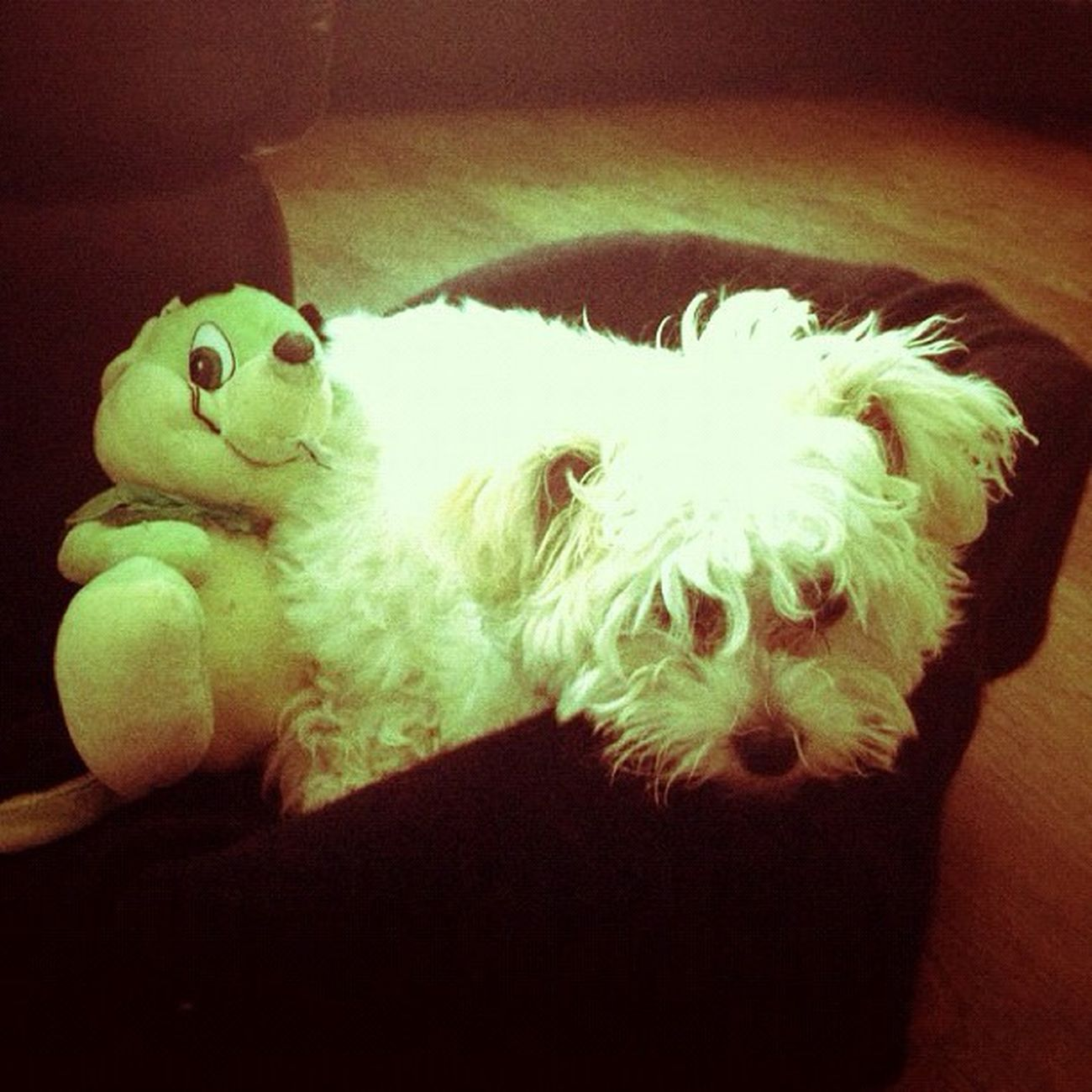 GUCCI Dog Puppy Pet Play Toy Gucci and her friend 🐶 Webstagram Instagram