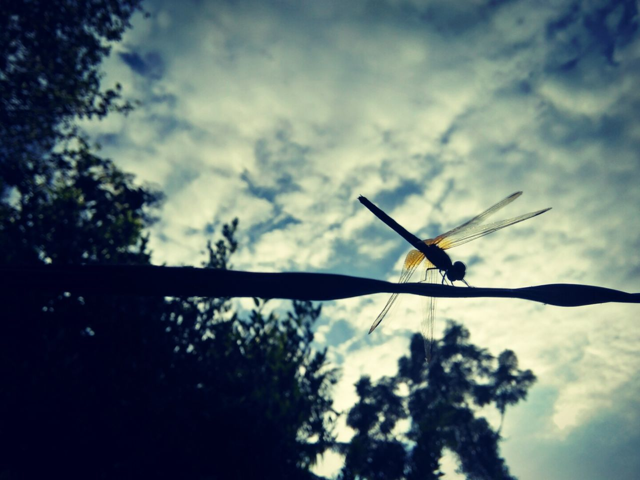 EyeEmNewHere Cloud - Sky Sky No People Outdoors Insect Day Beauty In Nature Close-up Dragonfly Afternoon