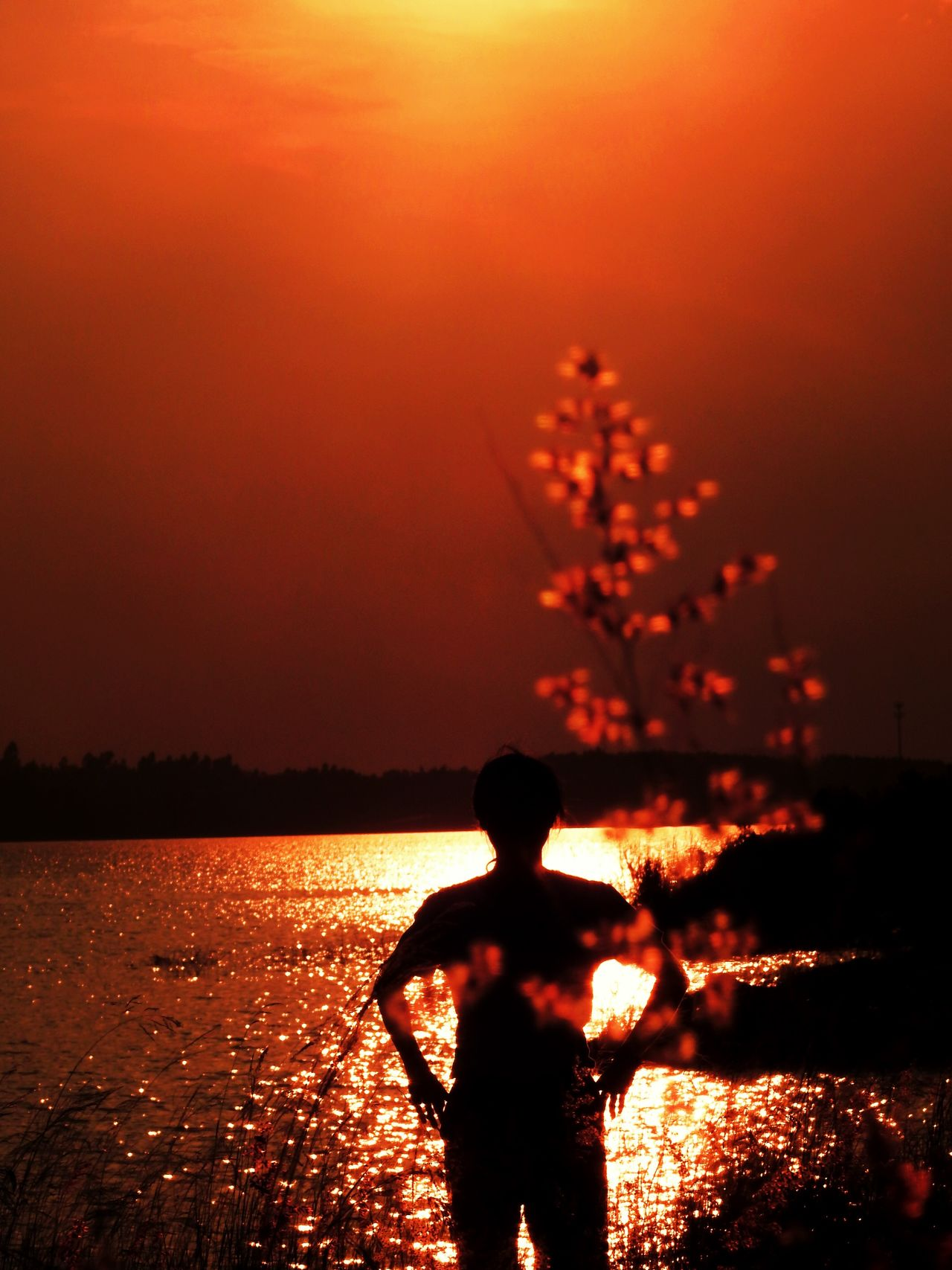 Sunset Silhouette Orange Color Night Real People Outdoors Nature Sea One Person Beauty In Nature Sky Scenics Water Tree People