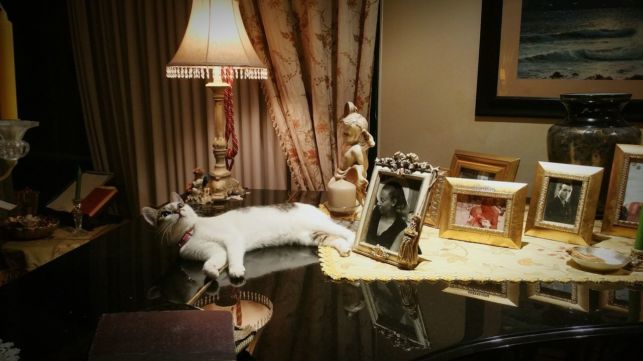 Bibby Pets One Animal Domestic Animals No People Pianolover Love Music House Indoors  Home Interior Illuminated Domestic Cat Photos Books Black And White Light Paintings Picture Candle Angel Statue Curtainside Decorations For Xmas