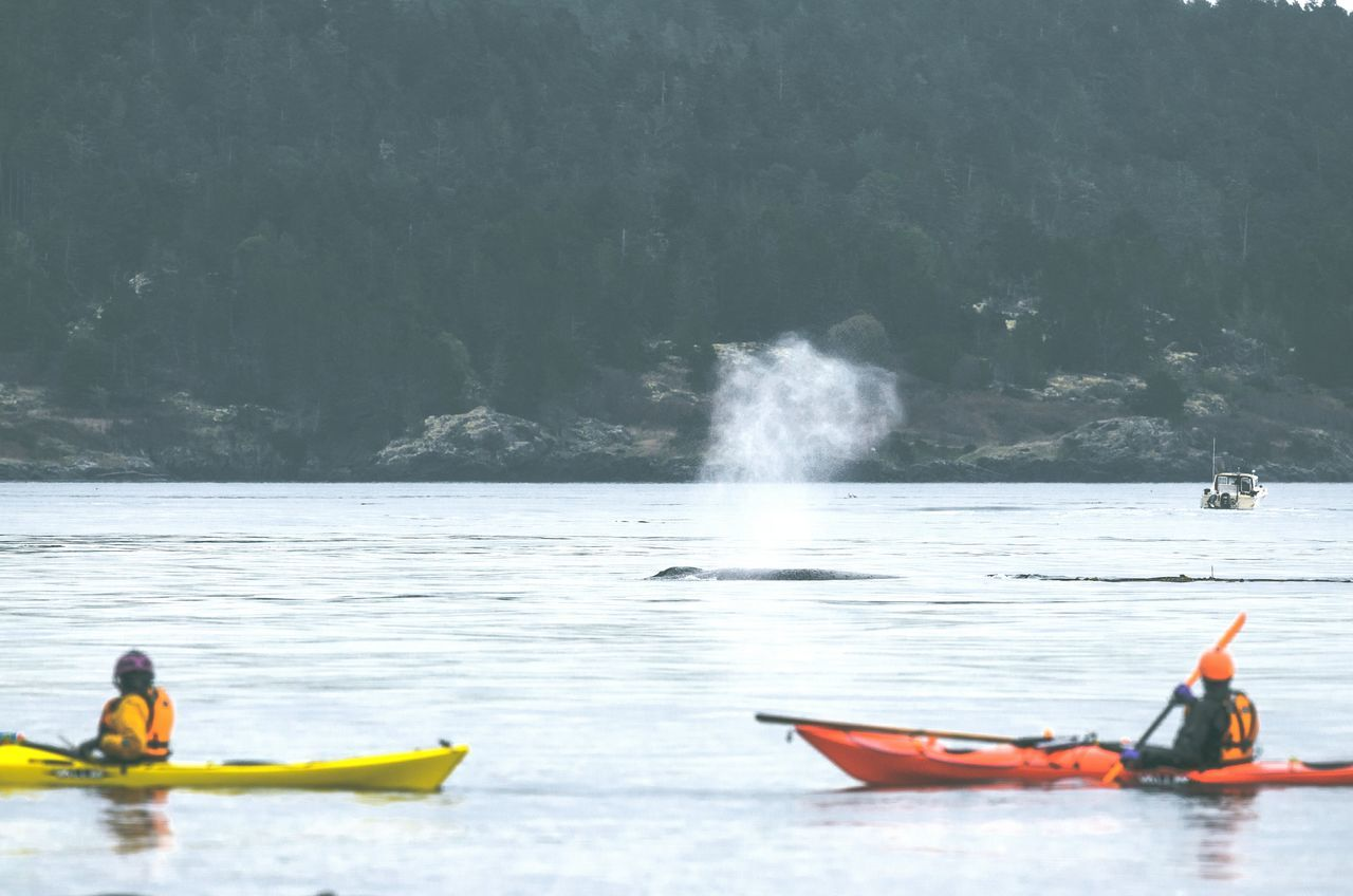 Nautical Vessel Water Kayak Two People Outdoors Nature Beauty In Nature Adventure Sport Powerful Nature WestCoast Beauty In Nature Kayakers Kayaker Leisure Activity Humpback Whale Whale Humpback Kayaking Marine Mammals Aquatic Sport Spray Sea Nature Scenics