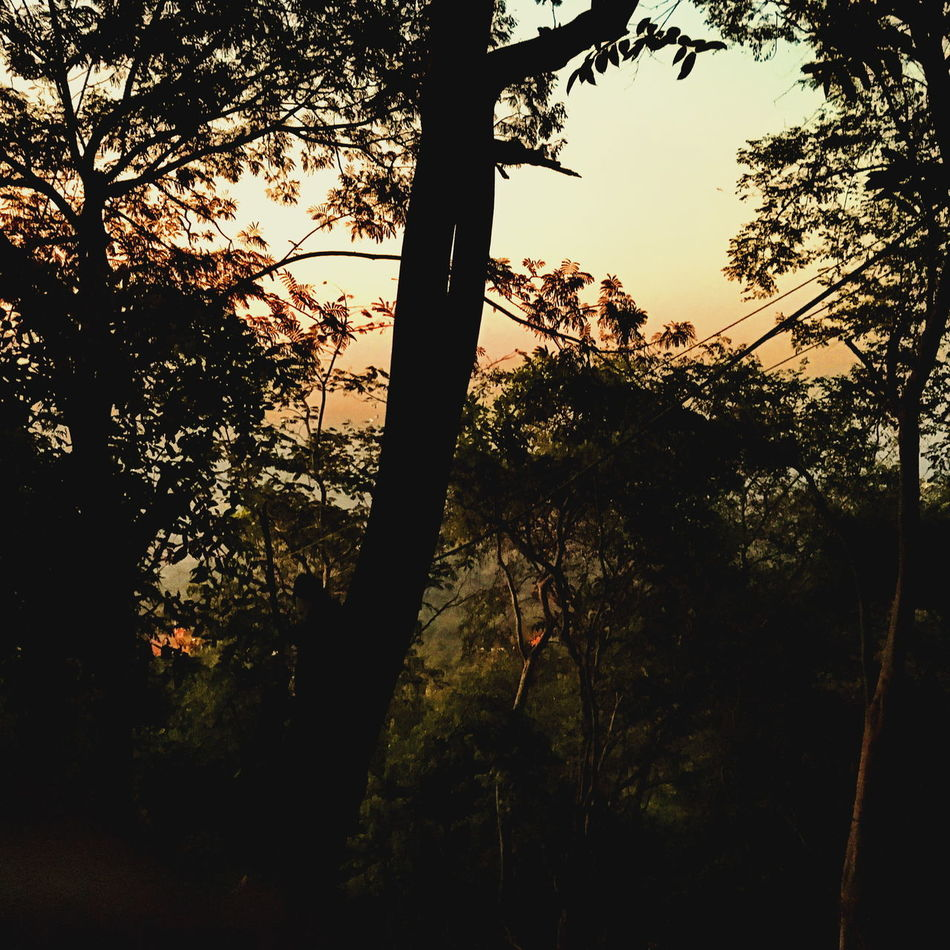 Beauty In Nature Branch Day Forest Growth Low Angle View Nature No People Outdoors Rope Swing Silhouette Sky Sunset Tree Tree Trunk Art Is Everywhere